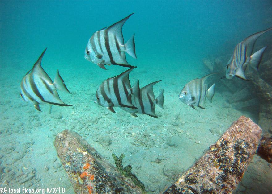 flat lens housing fish